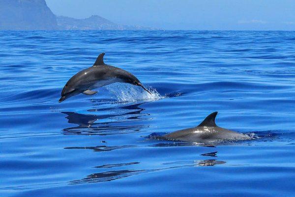Eolie, riparte il monitoraggio dei delfini