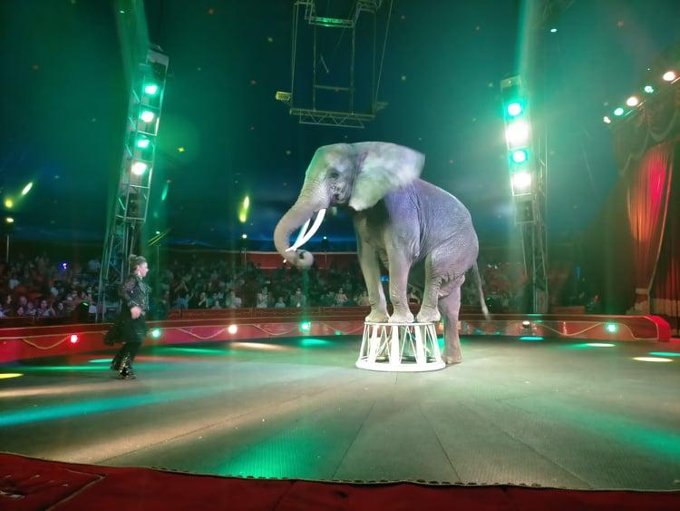 Messina, dopo un anno e mezzo ricomincia la magia del Circo di Darix Martini